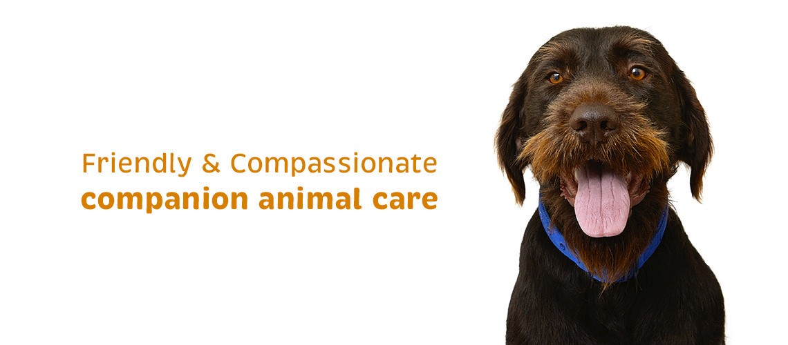Vetcare Kaikoura companion animal care dog