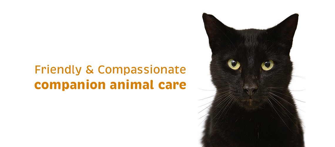 Vetcare Kaikoura companion animal care cats