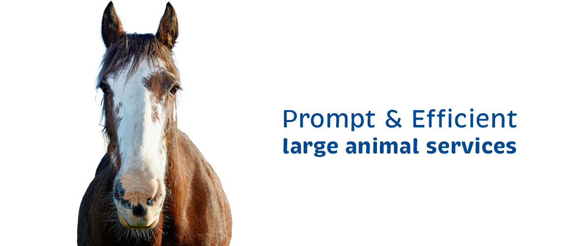 Vetcare Kaikoura large animal services horse
